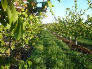 GAEC du Massip – Famille Ferrero  Fruits d'été