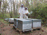 Lionel Petit et Marion Baudoin Le Balestier – Confiserie et gateau au miel et noix