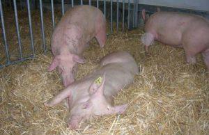 Famille Jézéquel-Bertrand  GAEC de la Pouretie  Trélissac  Producteurs de porcs