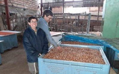 EARL du Port, producteurs de noisettes