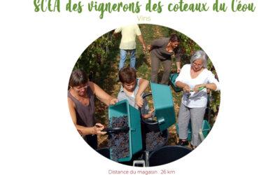 SCEA des vignerons des coteaux du Céou (Vin de Domme)